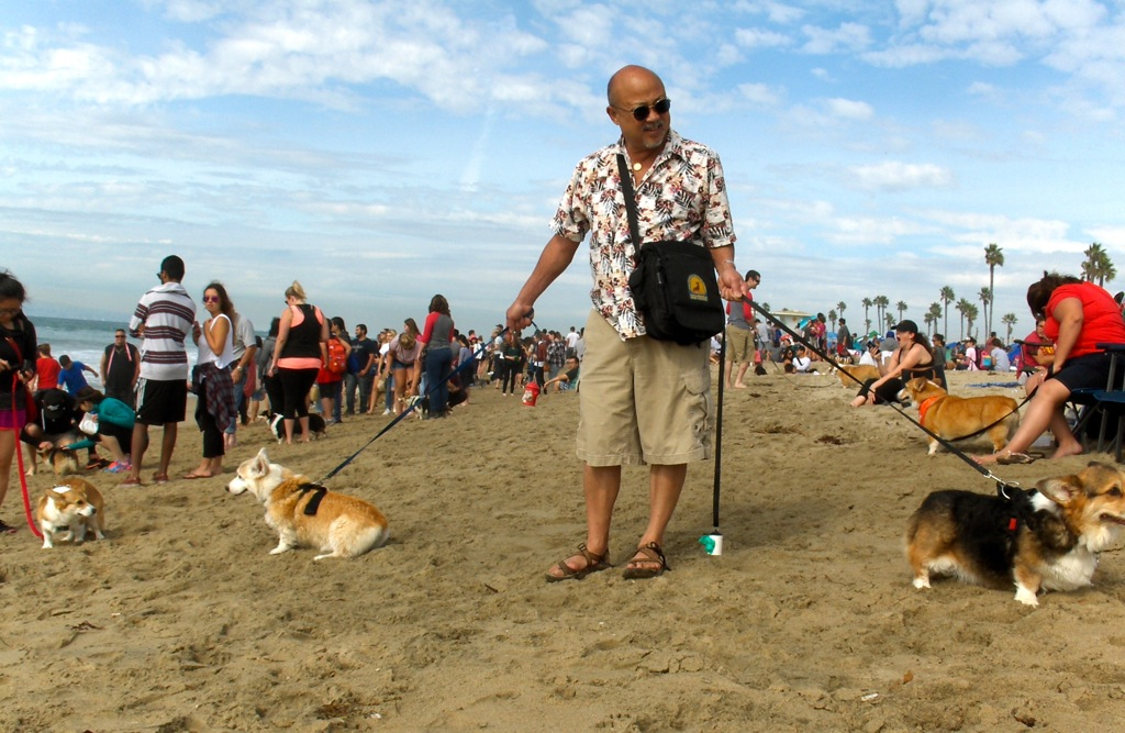 hpim2958-larry-corgis-on-beach