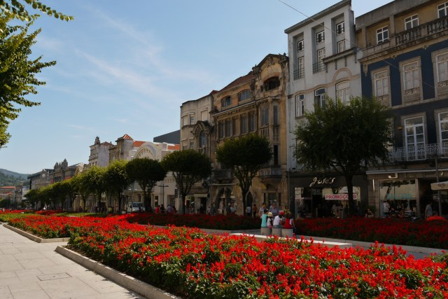 Flowers in bloom along Avenida Central - Braga, Portugal (10)
