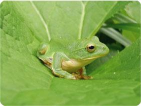 カエルから考える自然保護