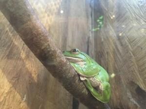 モリアオ蛙2