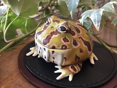 ツノガエル