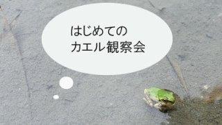 はじめてのカエル観察会 ~たくさんのカエルに出会いました~
