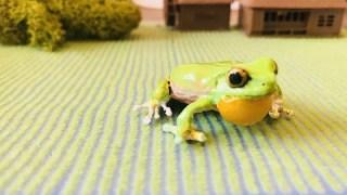 カエル図鑑から飛び出してきたカエルマグネット