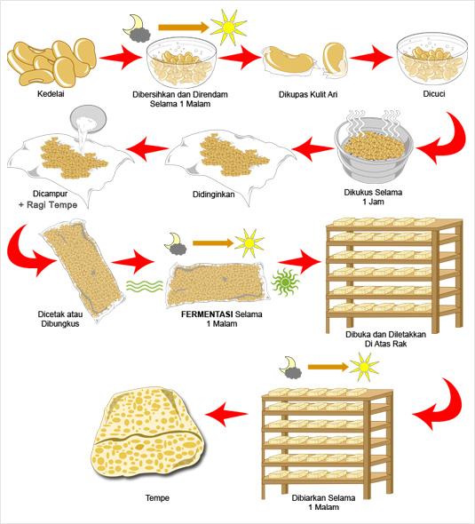 Mekanisme Pembuatan  tempe, proses pembuatan tempe, cara mebuat tempe, tempe mbah, proses pemeringkatan dalam membuat tempe,
