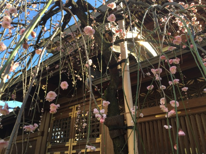 Tokyo*YushimaTenman-gū*I went there to see the plum blossoms