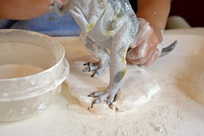 dinosaur fossil footprints