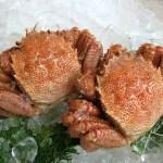 北海道の名産品は?魚に果物野菜などうまいものがたくさん!(海産物編)