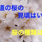 北海道の桜の時期や見頃や開花はいつ頃?桜の種類は?