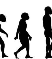 Menneskets oprindelse