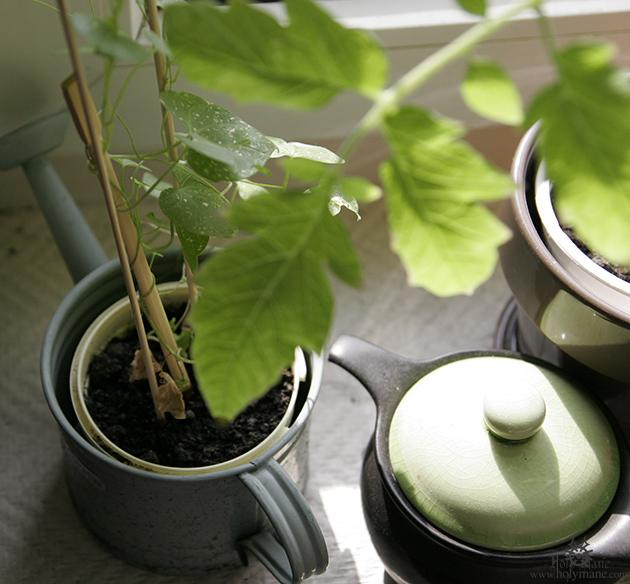 plants_027