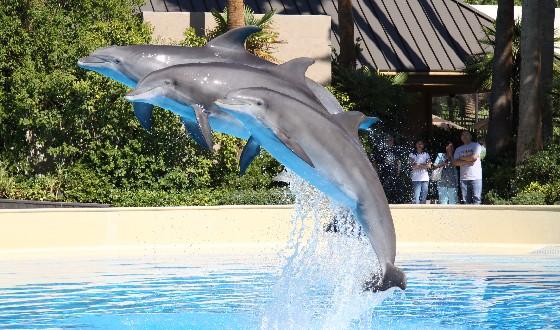 las-vegas-mirage-dolphins-jumping