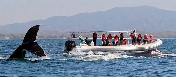 riviera nayarit whales2