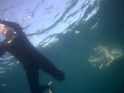 Nadando con atunes rojos en el Mediterráneo
