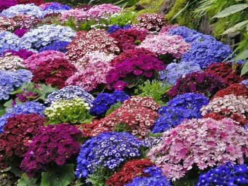японский сад клумба с яркими цветами