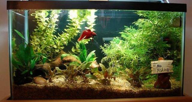 fish aquarium decorations secret fish aquarium decorating ideas fish