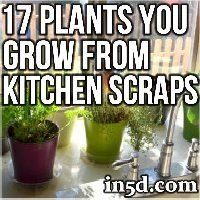 kitchen-scraps-toplants