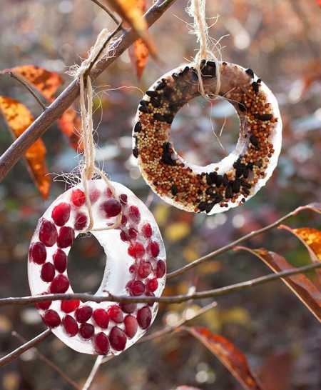 ice-bird-seed-ornaments