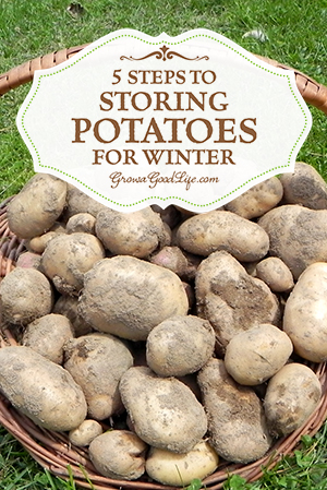 How To Store Potatoes For Winter Home And Garden