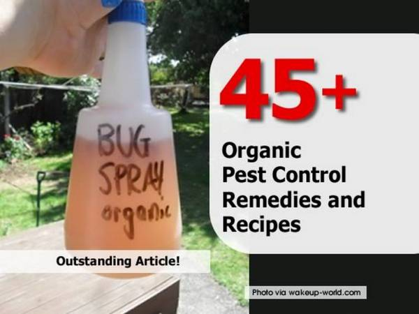 Organic And All Natural Recipes And Remedies For Pest