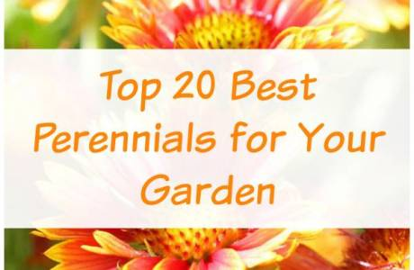 The Best Perennials You Can Plant