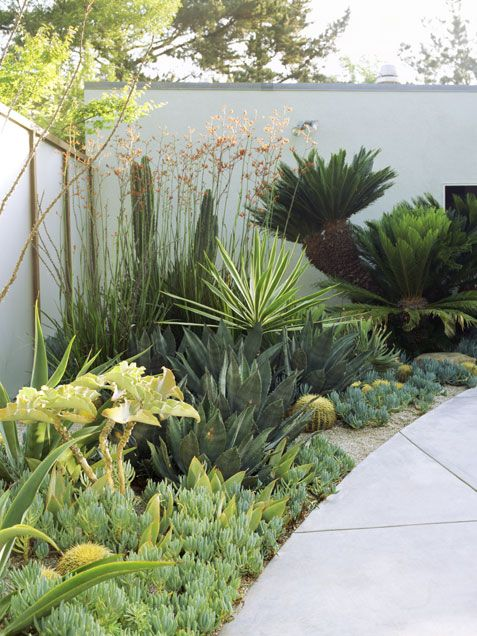 Drought Tolerant Green Gardens