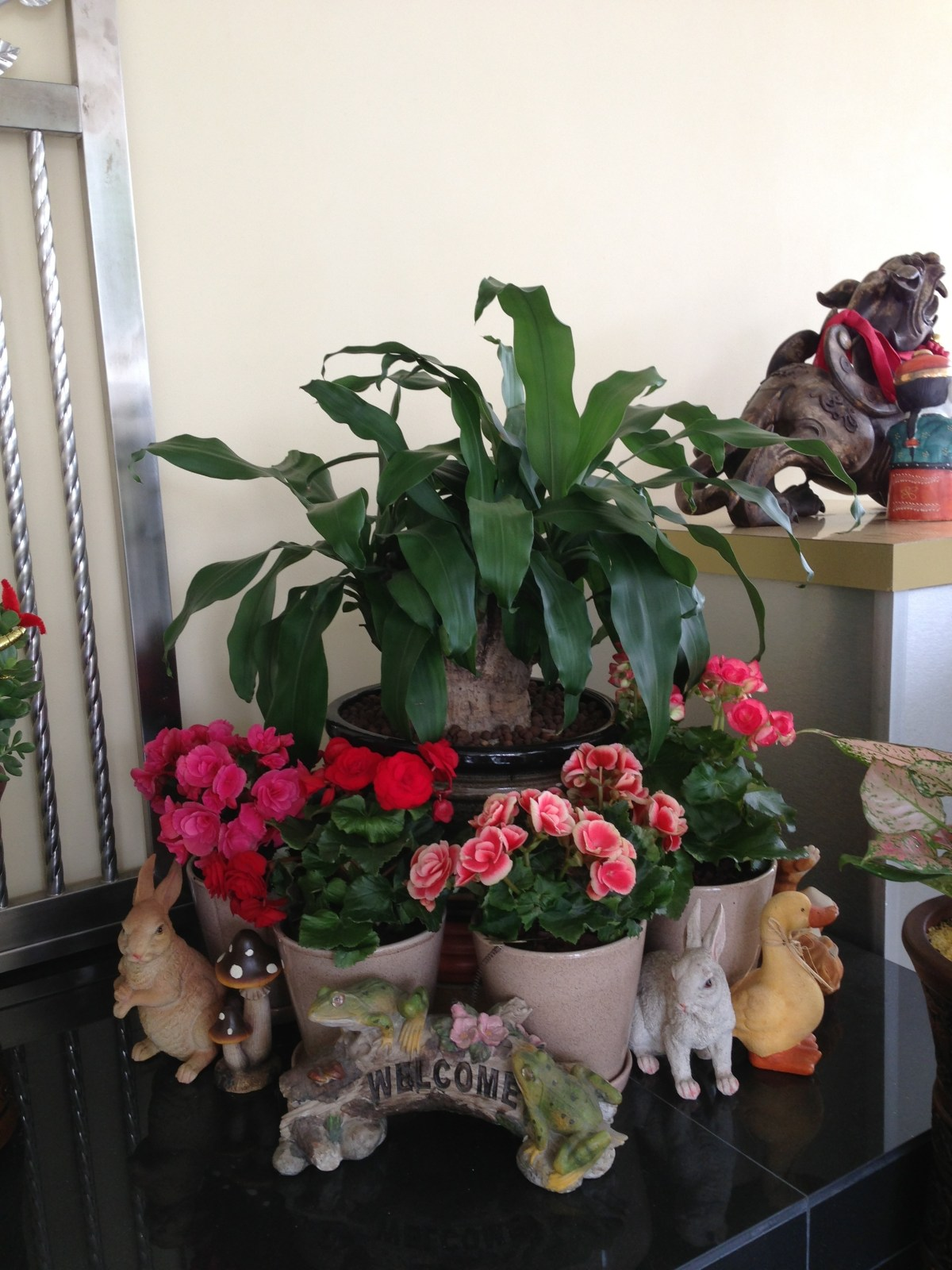 Chinese New Year Plants | GARDENING IS FUN