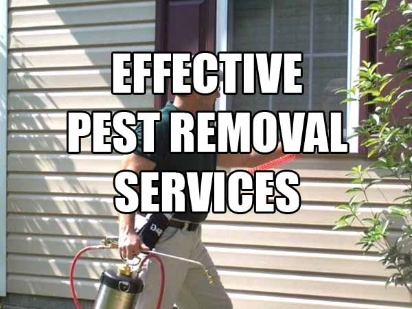 Pest Removal Service – Advanced Extermination Solution