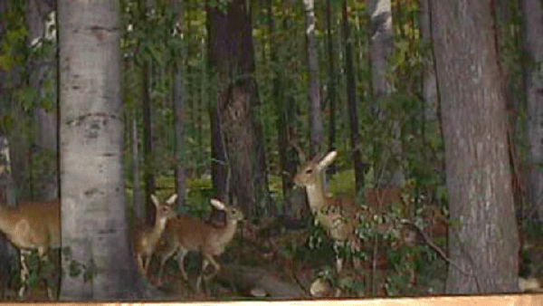Eastern Deciduous Forest and Urban Wildlife