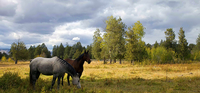 a-scenic-view-of-two-horses-one-white-and-one-brown-eating-in-a-field-650x305