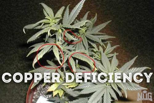marijuana copper deficiency