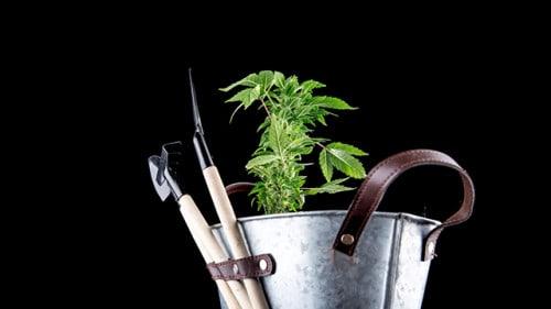 marijuana tools