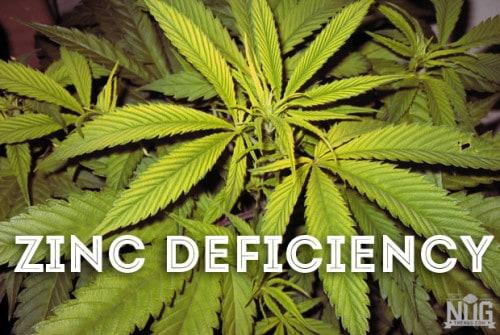 marijuana zinc deficiency