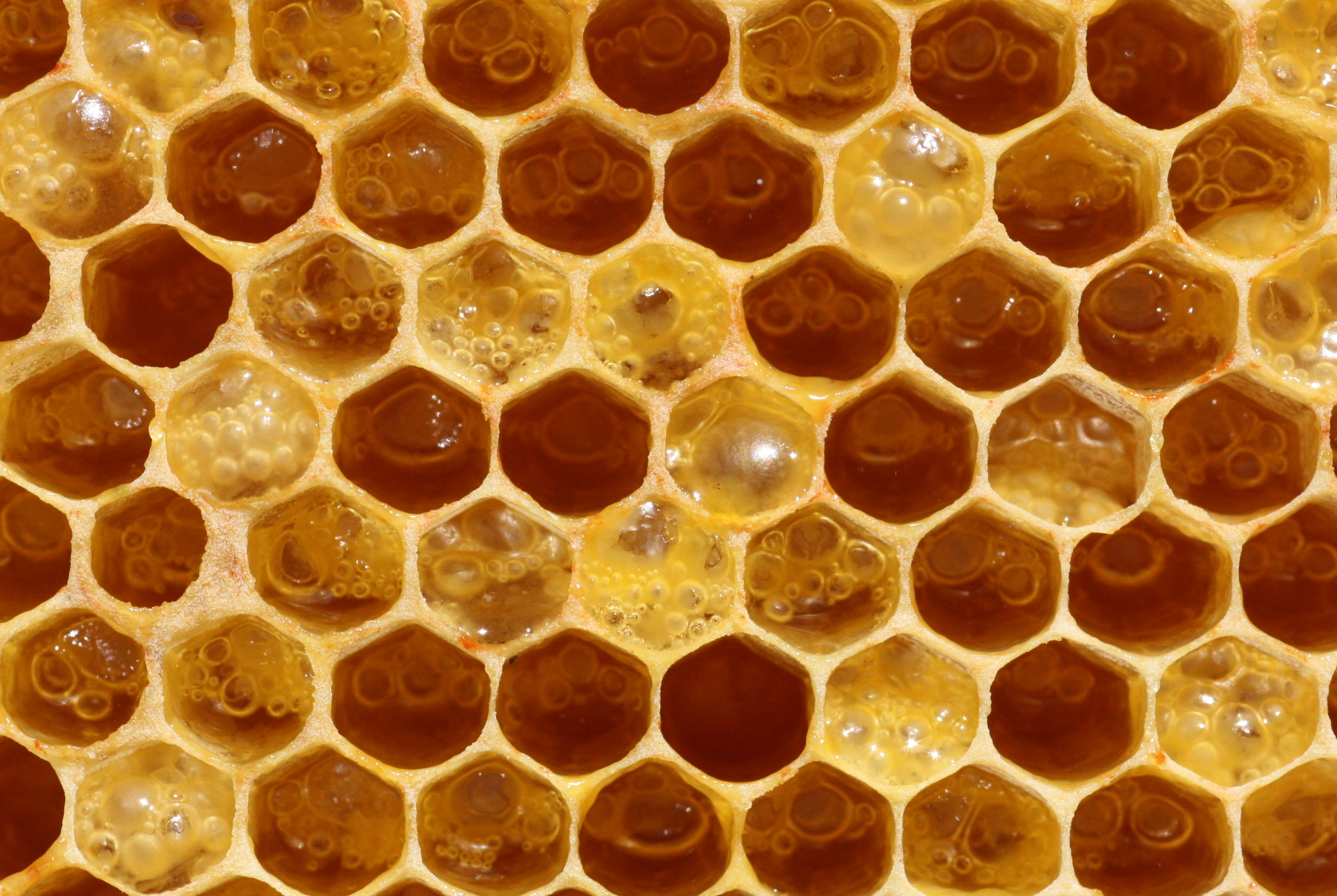 How to use the honey for the skin care and beauty care at home
