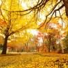 晴れの国岡山の旧閑谷学校で幻想的な紅葉に圧巻!その見頃と混雑状況をご紹介