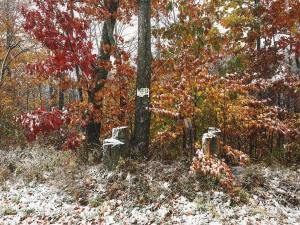 Youre drunk winter Fall isnt gone yet! fall snow colorshellip