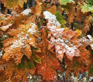 It was sticking! fall snow colors winter foliage