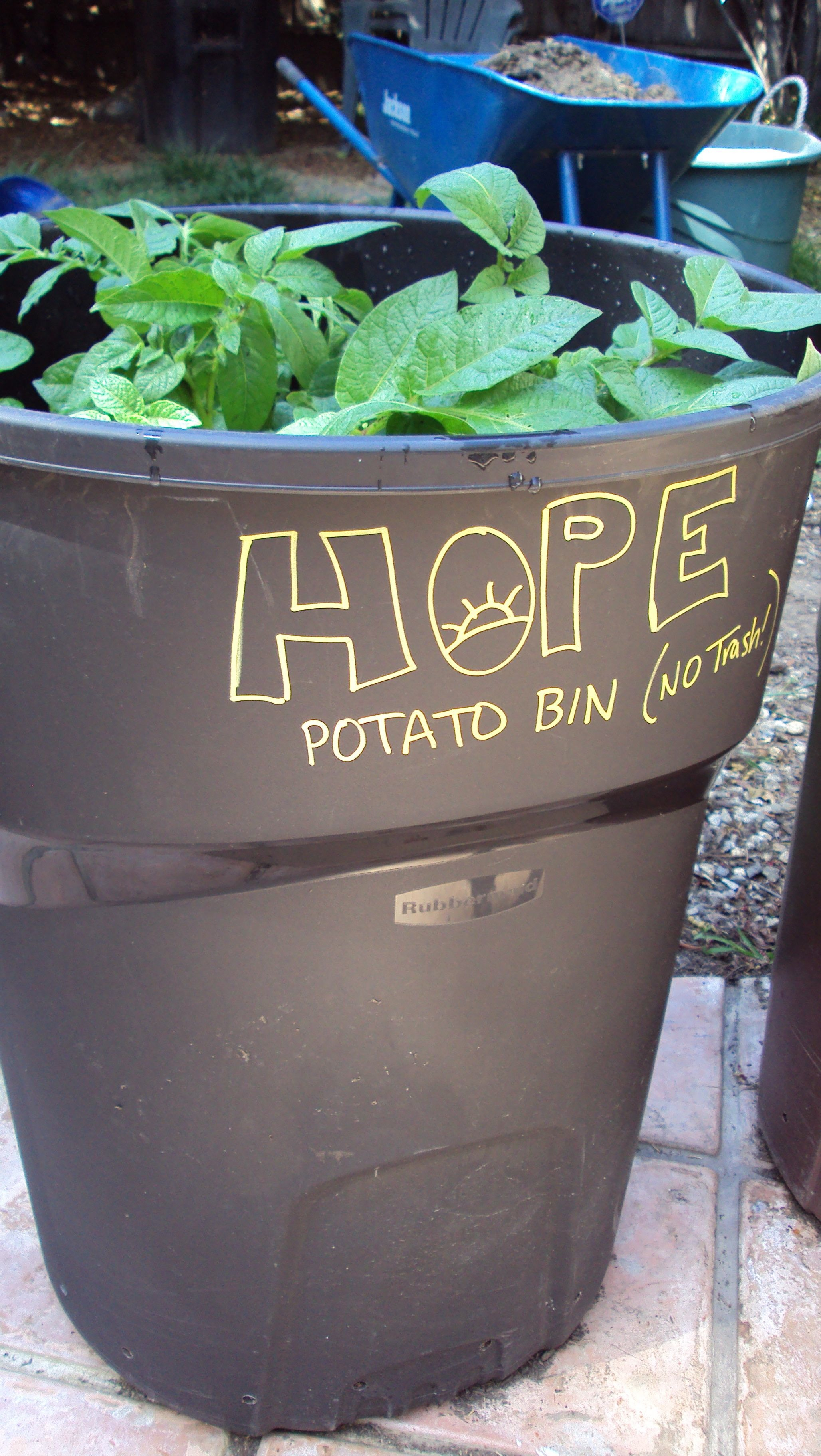 Creative Potato Planting Main Reason Weare Growing M This Is Most Important Part A Trash Potatoes Cannot Be Exposed To Sunwhile Y How To Grow Potatoes A Trash Can Hope Gardens houzz-02 Growing Potatoes Indoors