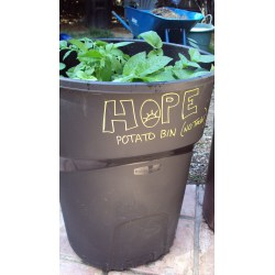 Creative Potato Planting Main Reason Weare Growing M This Is Most Important Part A Trash Potatoes Cannot Be Exposed To Sunwhile Y How To Grow Potatoes A Trash Can Hope Gardens