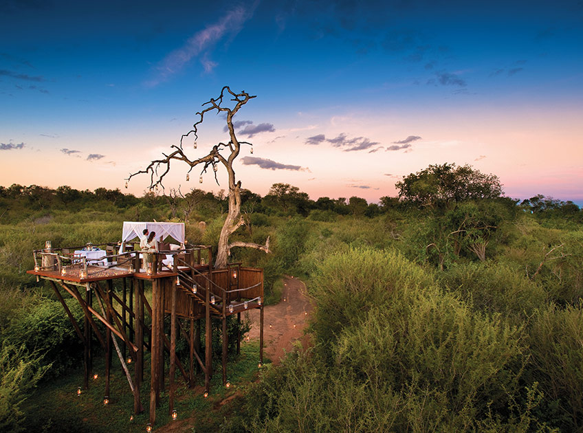 lion sands treehouse south africa safari