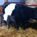 She's a strapping young heifer!
