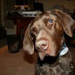 Ollie's famous head tilt.