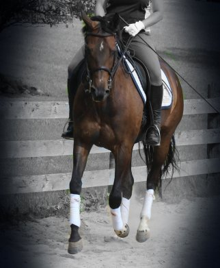 Cantering in the dark