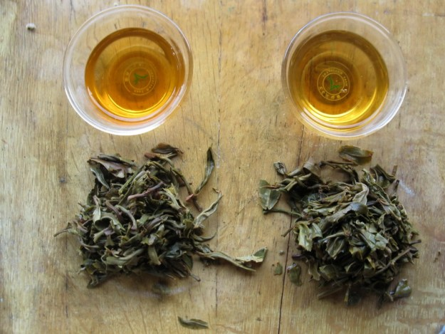 bulang peak 2010 and 2011raw puer tea broth and leaves