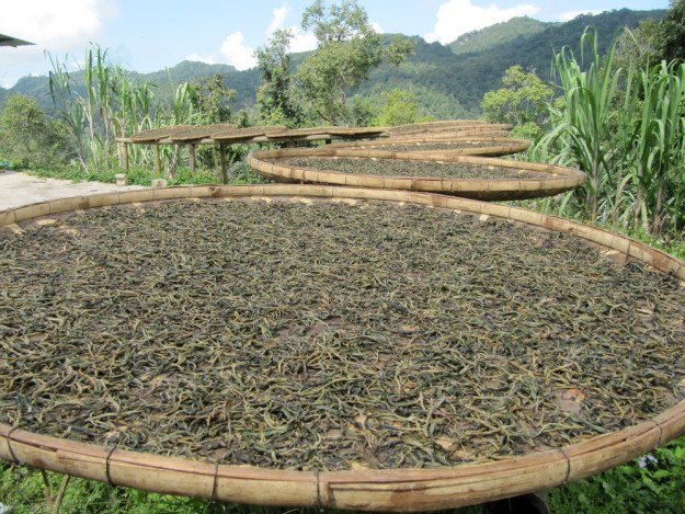 jinuo shan-autumn-tea-tea-drying