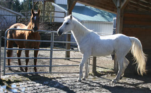 Lexy (left) and Misty after rehabilitation
