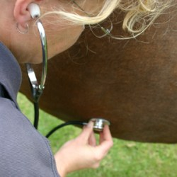Could biomarkers be used to distinguish colic types?