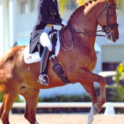 Yvonne Losos de Muniz quits dressage following decision