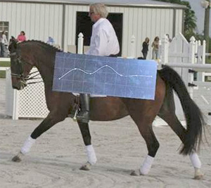 Here, we placed seven sensors on the horse's back. The sensors measure all type of accelerations. The computer program was set to measure exclusively the vertical forces created by the hind and front limbs. The greatest amount of vertical forces was registered by the sensor situated under the rider.