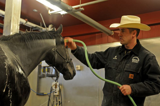 Sergeant  Erik Wies, veterinarian assistant with the US Army Caisson Platoon, 3d US Infantry Regiment (The Old Guard), bathes Omar at the Caisson stables on Joint Base Myer Henderson Hall, in Virginia.  Omar, a 21-year-old Caisson horse with 10 years of service, was recently retired through the horse adoption program.