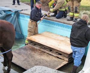 missy-pool-rescue2